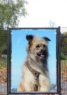 bedrucktes Glas | Hund